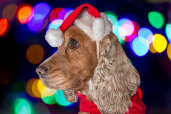 Santa dressed puppy dog christmas xmas Royalty Free Stock Photography