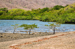 Santa Elena bay. Trees on Santa Elena bay at Guanacaste, Costa Rica Stock Photography