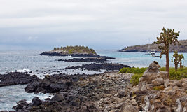 Santa Fe. View over cacti and weathered cliffs at Barrington Bay, Galapagos Royalty Free Stock Photos