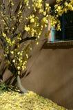 Santa Fe autumn Stock Photo