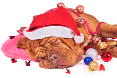 Santa Fell Asleep Royalty Free Stock Images