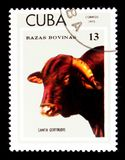 Santa Gertrudis Bos primigenius taurus, Breeds of cattle serie, circa 1973 Royalty Free Stock Images