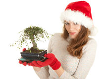 Santa girl in red Christmas hat with bonsai tree Stock Images