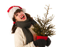 Santa girlwith Christmas tree Stock Photos