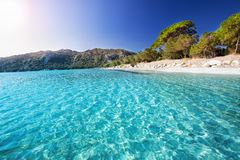Santa Giulia sandy beach with pine trees and azure clear water, Corsica, France Royalty Free Stock Images