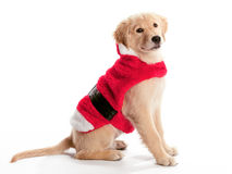 Santa Golden Retriever Royalty Free Stock Photo