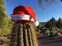 Santa Hat auf Kaktus Stockbild
