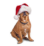 Santa hat and dog Royalty Free Stock Images