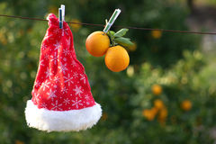 Santa hat and oranges Royalty Free Stock Images
