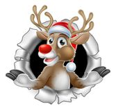 Santa Hat Reindeer Breaking Through Background Royalty Free Stock Photography