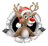 Santa Hat Reindeer Tearing Through Background Stock Photos