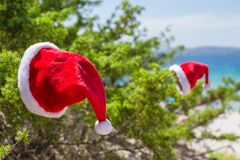 Santa hat on spruce bush background the turquoise Royalty Free Stock Photography