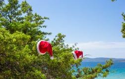 Santa hat on spruce bush background the turquoise Stock Photo