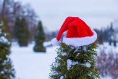 Santa hat on spruce bush Stock Images