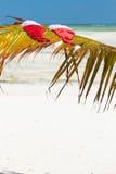 Santa hats on palm leaf Stock Photography