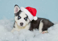 Santa Husky Puppy Royalty Free Stock Photos