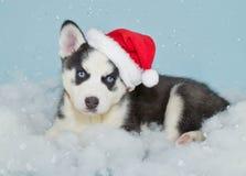 Santa Husky Puppy Royalty Free Stock Photos