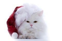 Santa katt Arkivbild