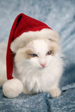 Santa kitten Royalty Free Stock Photography