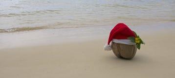 Santa kokosnöt Fotografering för Bildbyråer