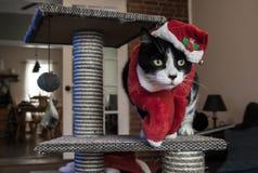 Santa kot Z Red Hat I szalikiem Zdjęcie Royalty Free