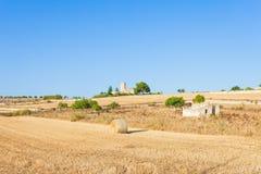 Santa Margalida, Mallorca - siano fedrunek na polach Mallorca obrazy stock