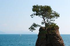 Santa Margherita Ligure, genua, Liguria, Włochy, włoszczyzna Riviera, Europa Obrazy Stock
