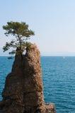 Santa Margherita Ligure, genua, Liguria, Włochy, włoszczyzna Riviera, Europa Zdjęcie Stock