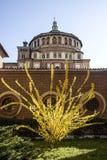Santa Maria delle Grazie (Milan): kupol och forsythia (tidig spri Royaltyfria Bilder