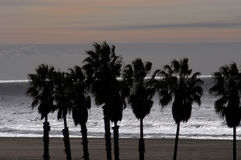 Santa Monica beach. Palms along the beach stock photo