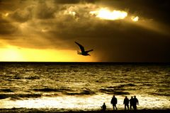 Bird Flying Over Silhouette People At Beach Against Cloudy Sky During Sunset IN Santa Monica Beach Stock Photos