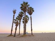 Santa Monica Beach. Palm Trees at Sunset on the Beach at Santa Monica Royalty Free Stock Photos