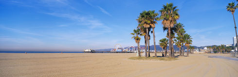 This is the Santa Monica Beach and pier with its amusement park. There are palm trees in the foreground. Royalty Free Stock Photography