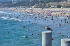 Santa Monica Pier Fotografering för Bildbyråer