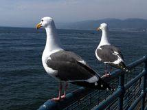 Santa Monica Pier nach dem Tsunami Lizenzfreies Stockfoto
