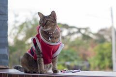 Santa ordynariusza kot Zdjęcie Stock