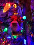 Santa Ornamnet στοκ φωτογραφίες με δικαίωμα ελεύθερης χρήσης