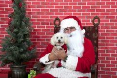 Santa Paws com o cão de cachorrinho branco horizontal fotos de stock