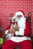 Santa Paws con un cucciolo di cane bianco Fotografie Stock Libere da Diritti