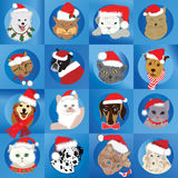 Santa Pets Royalty Free Stock Image