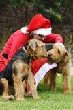 Santa pomagierów mała kobieta w Święty Mikołaj kostiumu & dwa dużych psach Obrazy Royalty Free