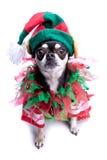 Santa pomagiera elfa Mały pies Obraz Royalty Free