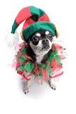 Santa pomagiera elfa Mały pies Zdjęcie Stock