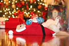 Santa Pomeranian Στοκ φωτογραφία με δικαίωμα ελεύθερης χρήσης