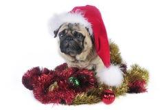 Santa Pug Royalty Free Stock Image