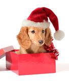 Santa pup. Christmas puppy in a Santa hat Stock Images