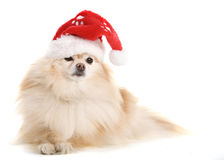 Santa Pup Stock Photography