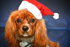 Santa Puppy Royalty Free Stock Image