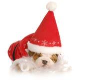 Santa puppy Stock Image