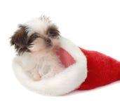 Santa Puppy. Cute little Shih Tzu puppy in a Santa hat stock photo